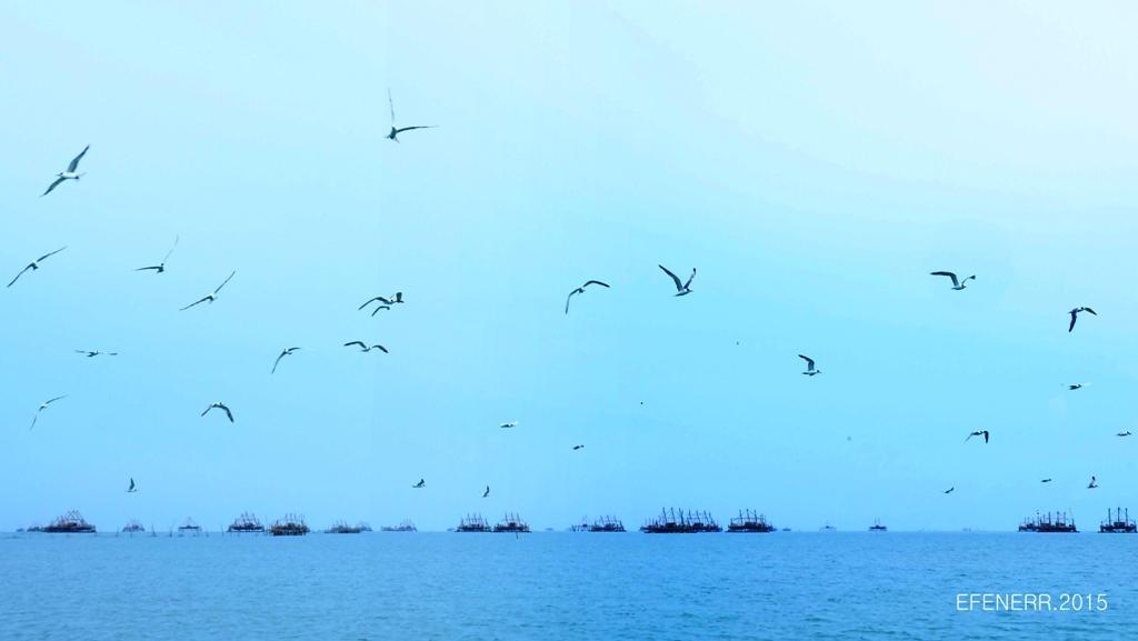 Burung Camar di Langit Tanjung Lesung