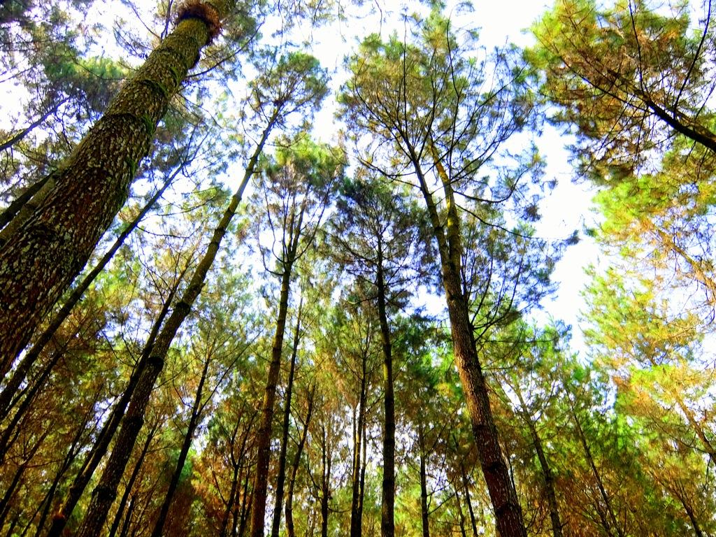 Top Selfie Pinusan Kragilan Wisata Hutan Pinus Di Magelang